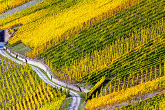 Autumn Colorful Moselle Landscape and Vineyards Royalty Free Stock Photography