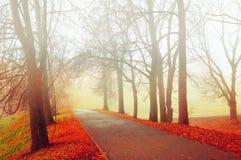 Autumn nature - misty autumn view of autumn park alley in dense fog. Autumn landscape. Autumn colorful nature - foggy autumn view of autumn park alley in dense royalty free stock photos
