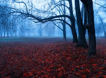 Autumn colorful November foggy landscape. Deserted autumn park alley with bare trees and dry fallen orange autumn leaves stock photos