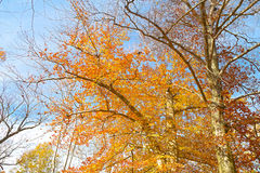 Autumn colorful palette Stock Photography