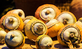 Autumn colorful pumpkins. Stock Photography