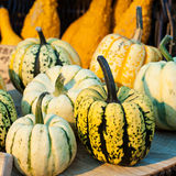 Autumn colorful pumpkins. Royalty Free Stock Photography