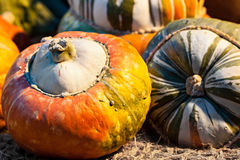 Autumn colorful pumpkins. Royalty Free Stock Image