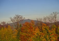 Autumn colorful red orange forest and trees and hill in golden l Royalty Free Stock Photography