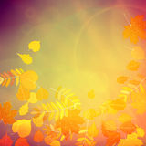 Autumn Colorful red and yellow leaves. Royalty Free Stock Images