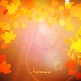 Autumn Colorful red and yellow leaves. Stock Photo