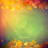 Autumn Colorful red and yellow leaves. Stock Photos