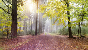 Autumn Colorful Scene. Nature Photo. Natural Colorful Forest royalty free stock image