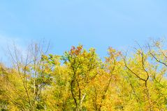 Autumn colorful trees and blue sky Royalty Free Stock Image