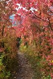 Autumn colorful trees Stock Photography