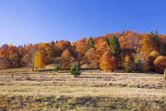 Autumn colorful trees forest , countryside landscape Royalty Free Stock Image