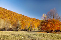 Autumn colorful trees forest , countryside landscape Royalty Free Stock Photo
