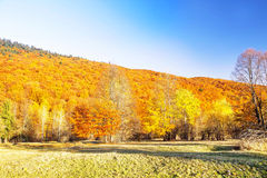 Autumn colorful trees forest , countryside landscape Royalty Free Stock Photography