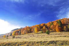 Autumn colorful trees forest , countryside landscape Royalty Free Stock Images