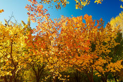 The autumn colorful trees landscape Stock Photos