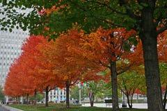 Autumn colorful trees Stock Photo
