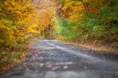 Autumn colorful trees near the road. Autumn colorful forest near the road Royalty Free Stock Photo