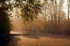 Autumn colorful trees in park Stock Images