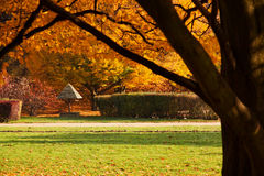 Autumn colorful trees in park Royalty Free Stock Photography