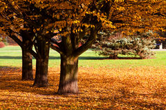 Autumn colorful trees in park Stock Photos