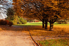 Autumn colorful trees in park Stock Photography