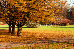 Autumn colorful trees in park Royalty Free Stock Images