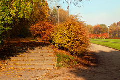 Autumn colorful trees in park Royalty Free Stock Photo