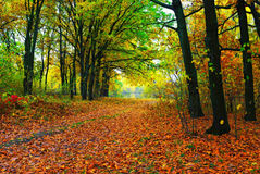 Autumn colorful trees and path stock photography