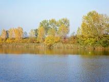 Autumn Colorful Trees Reflecting en rivière photo stock