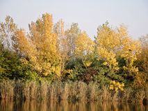 Autumn Colorful Trees Reflecting in Rivier royalty-vrije stock foto's