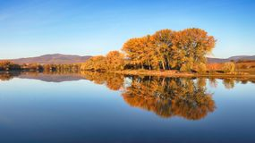Autumn colorful trees under morning sunlight reflecting in tranquil river.  stock images