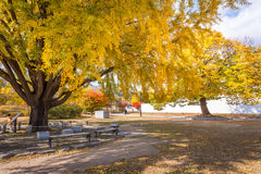 Autumn colorful trees before winter in the park of South Korea. Royalty Free Stock Photo
