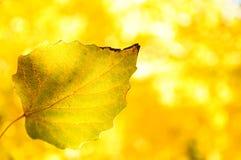 Autumn Colorful va con bello fondo fotografia stock