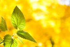 Autumn Colorful va con bello fondo fotografie stock libere da diritti