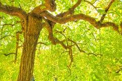 Autumn Colorful va con il fondo del sole fotografia stock