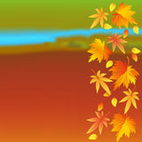 Autumn colorful wallpaper with leaves Royalty Free Stock Photo