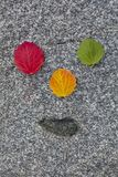 Autumn Colorful Wood Leaves Rosso, giallo e verde I precedenti sono pietra grigia immagini stock