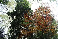 Autumn, colourful woods. In autumn, the colorful woods are very clear and beautiful Royalty Free Stock Photography