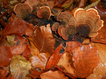 Autumn colorit. Simple autumn leaves leaf fall wood forest wet mushrooms Stock Photo