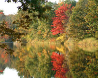 Autumn Colors. Reflection of trees in the fall, along a lake. colorful landscape, with still reflective water royalty free stock photos