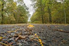 Autumn Colors Photographie stock libre de droits