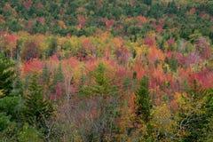 Autumn Colors Stockfotografie