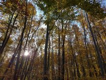 Autumn Colors Immagini Stock Libere da Diritti