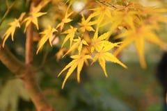 9 autumn colors Στοκ Εικόνα