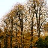 Autumn Colors fotografia stock libera da diritti