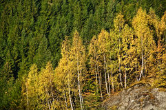 Autumn Colors. Golden Autumn Scene in October Royalty Free Stock Photography