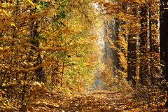 Autumn colors. Vibrant autumn colors in the forest Stock Photos