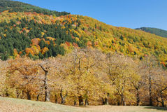 Autumn colors. Forest with the colors of the autumn Royalty Free Stock Images