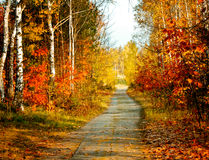 Free Autumn Colors Stock Photography - 12130402