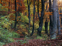 Autumn colors. Autumn wood in full colors Royalty Free Stock Photography
